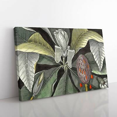 £19.95 • Buy Umbrella Magnolia Tree By Mark Catesby Canvas Print Wall Art Picture Large