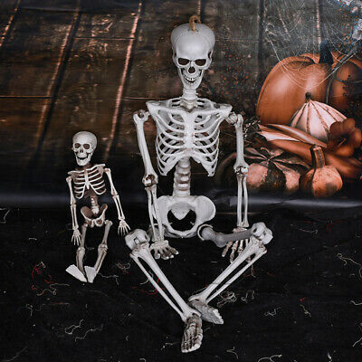 $7.49 • Buy 15/40cm Poseable Full Life Size Human Skeleton Halloween Decoration Party ProB9