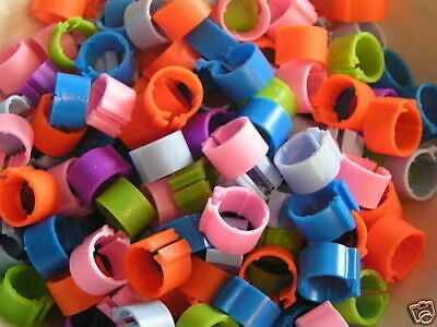 50 X New Bright Clip On Poultry Leg Rings 12mm - Chickens, Bantams, Pullets  • 4.50£
