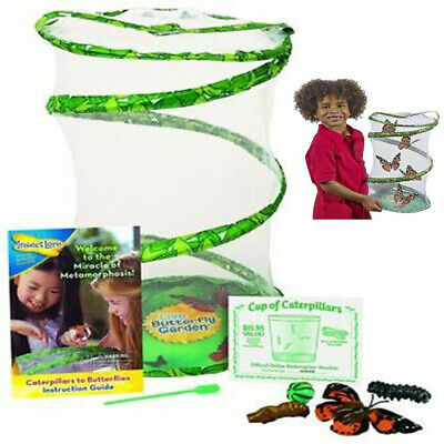 Hatching Kit Insect  Live Lore - GIANT Butterfly Garden • 13.49£