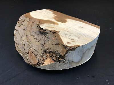 Yew Character Wood Turning Blank 200mm Dia X 52mm Thick - Part Natural Edge • 0.99£