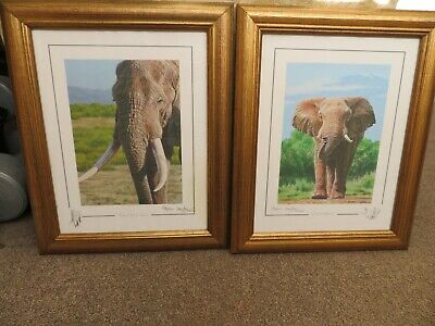 Limited Edition Pair Of Elephant Prints, Signed Stephen Gayford • 15£
