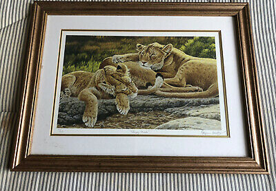 Stephen Gayford - Limited Edition Print   Sleeping Heads   LIONS 921/1250 Framed • 20£