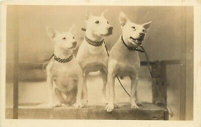 $84.99 • Buy 1920s RPPC 3 White Bull Terriers Dog Food Advertising Old Grist Mill Dog Bread