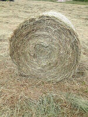 £30 • Buy SOLD OUT!! 2020 Very Good Quality 4FT Round Hay Bales,Gloucestershire.