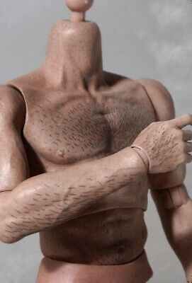 £37.29 • Buy 1/6 Scale Muscular Hairy Male Body Figure Doll For Phicen TBLeague Hot Toys Head