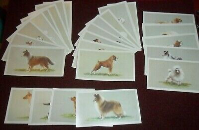 John Player Grandee Cigarette Cards  Top Dogs Collection  (1979) Complete • 1.99£