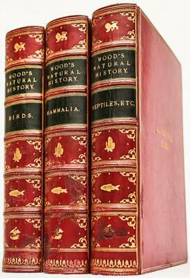 £566.39 • Buy 1884 The Illustrated Natural History By J.G. Wood Mammals Birds Reptiles Leather