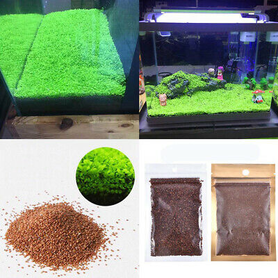 DIY Aquarium Plant Seeds Fish Tank Aquatic Water Grass Foreground Easy Plants 5g • 0.99£