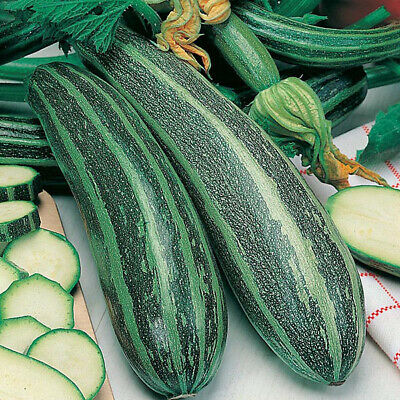 £2.90 • Buy Marrow Long Green Bush 2 - 20 Seeds - Free Delivery - Quality Vegetable Seeds