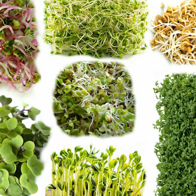 £1.89 • Buy Seeds For Sprouting, Microgreens, Healthy - Easy To Grow At Home, Multi-listing