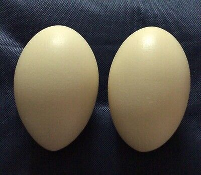 £23 • Buy Two Rhea Eggs, Blown Ready To Decorate