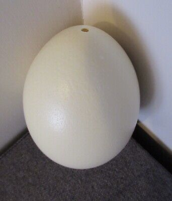 £12.50 • Buy Rhea Egg, Blown Ready To Decorate