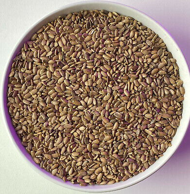 $15.99 • Buy 8oz Wildcrafted MILK THISTLE SEED WHOLE Normalizes Liver Function Potent