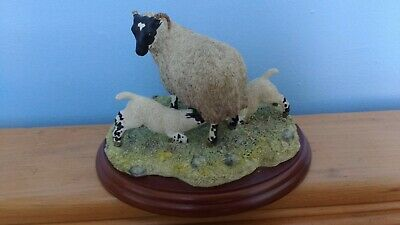 £35 • Buy Border Fine Arts. 'Double Take'. Model No. JH108. Black Faced Ewe And Two Lambs.