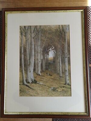 £4.99 • Buy Framed Edwardian Print James T Watts - Nature's Cathedral  24  X 19