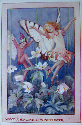 £0.95 • Buy     A Vintage Colour Postcard. By Margaret Tarrant. Wodd Anemone Or Windflower.