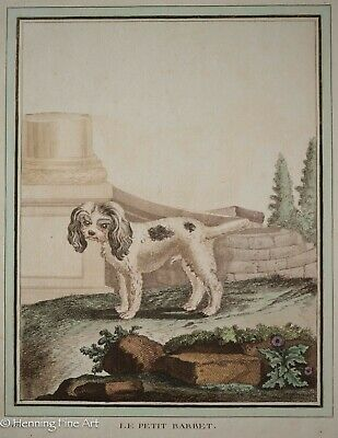 £91.40 • Buy Beautiful 18th Century Antique Engraving Of Small Dog  Le Petit Barbet