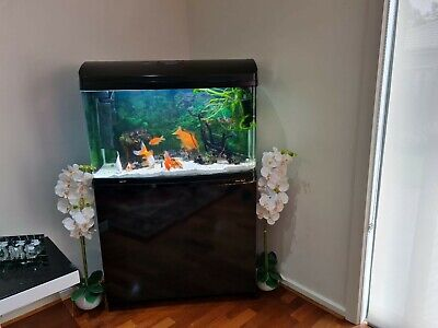 AU250 • Buy 3FT Fish Tank With Cabinet & Hood