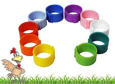 100 X 12mm Poultry Clip Leg Rings 10 Colours Chicken Pheasant Hatching Eggs • 6.95£