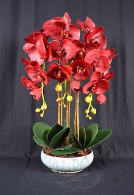 AU84.95 • Buy Medium Artificial Phalaenopsis Orchid Plants With Porcelain Pot [Dark-Red]