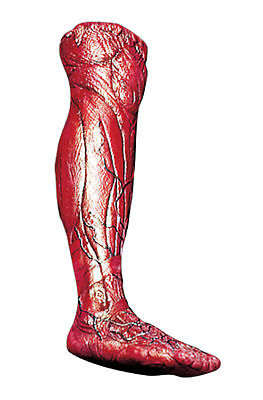 $ CDN33.95 • Buy Skinned Right Cut Off Leg Body Part Prop Halloween Haunted House Decoration
