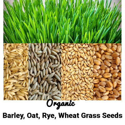 £9.95 • Buy 10g-1kg Organic Wheatgrass Barley Oat Rye Seeds For Sprouting & Juicing Free P&P