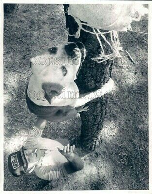 $ CDN24.26 • Buy 1987 Press Photo Barney Odom & Tree Climbing Dog Flat Nose Dovesville SC