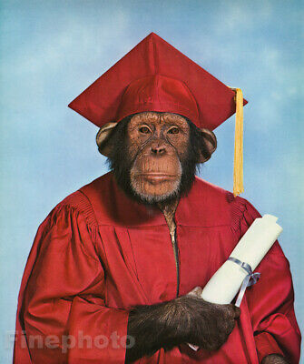 $ CDN152.36 • Buy 1959 MONKEY HUMOR Chimpanzee GRADUATION STUDENT College Education Animal Photo