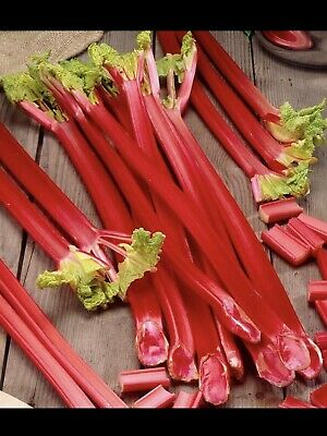 Pie Favourite ...rhubarb Victoria..50 Fresh Quality Seeds..fast Free Uk Dispatch • 1.99£