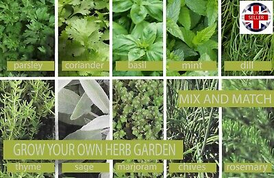 Grow Your Own Herb Garden - 10 Varieties To Mix And Match From - Chives Dill Etc • 2.25£