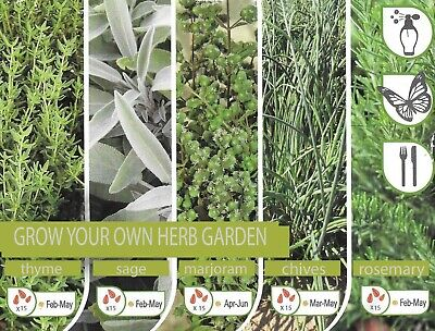 Easy Grow Your Own Herb Garden - Sage - Marjoram - Chives - Thyme - Rosemary • 3.85£