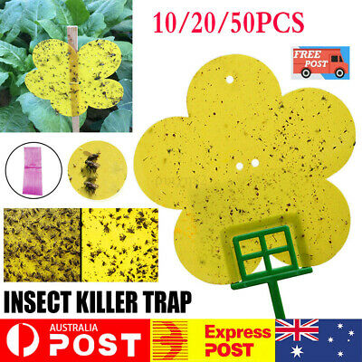AU17.39 • Buy Yellow Sticky Insect Killer Whitefly Thrip Fruit Fly Gnat Leafminer Trap AU ❤