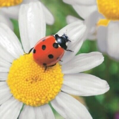 4 X Paper Napkins For Decoupage, Crafts, Scrapbooks - Ladybug On Daisy • 1.20£