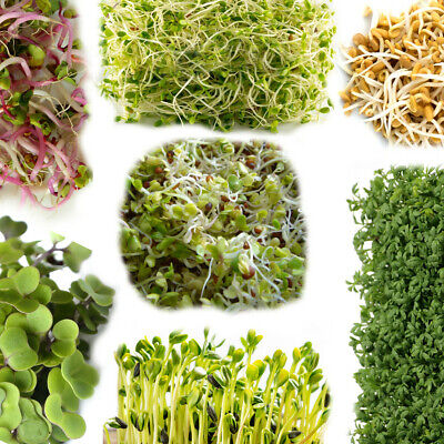 £2.99 • Buy Organic Seeds For Sprouting Sprouts, Microgreens, Healthy Salad - 24 Types Seed