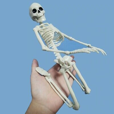 $ CDN15.04 • Buy Human Anatomical Skeleton Learning Teaching Model  Halloween Party Decoration