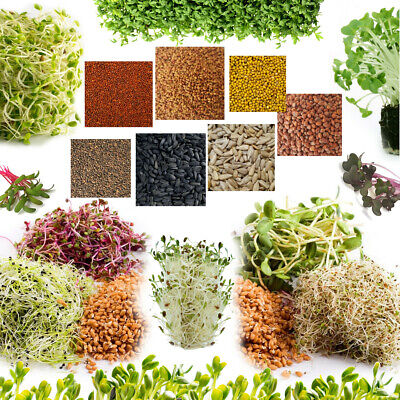 £2.99 • Buy Organic Seeds For Sprouting Sprouts, Healthy Micro Greens, SUPERFOOD - 22+ Seeds