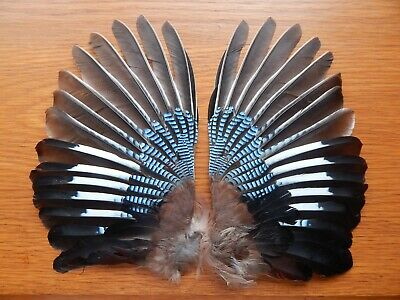 Spread Pair Dried Jay Wings Bird Wings Fly Tying Arts Crafts Taxidermy • 8.99£