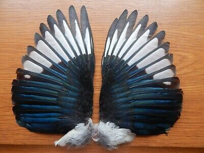 Pair Dried  Magpie Wings  Bird Wings Fly Tying Arts Crafts Taxidermy • 8.99£