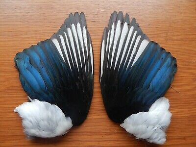 Pair Dried  Magpie Wings Bird Wings Fly Tying Arts Crafts Taxidermy • 7.49£