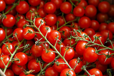 Piccolo Tomato '50 Seeds, Grown & Seeds Come From Thanet In Kent • 1.60£