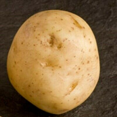 Seed Potatoes BALLYDOON. Often Described As Ideal For The First Time Grower. • 5.99£