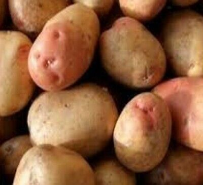 Seed Potatoes KING EDWARD. Probably Englands Best Known Potato. Maincrop Variety • 5.99£