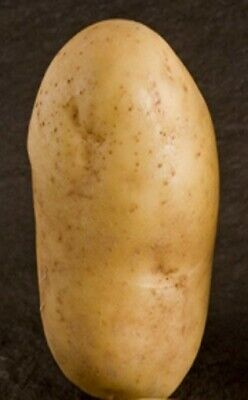 Seed Potatoes PENTLAND DELL. Long Shaped Tubers With White Skin And Floury Taste • 5.99£