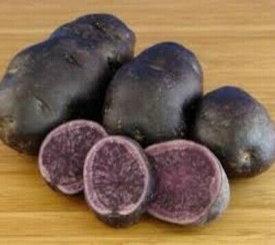 SEED POTATOES SALAD BLUE. Both The Skin And Flesh Are A Strong, Deep Blue. • 5.99£