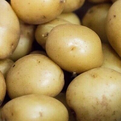 Seed Potatoes COLLEEN. Recently Introducted High Yielding First Early Variety. • 10.99£