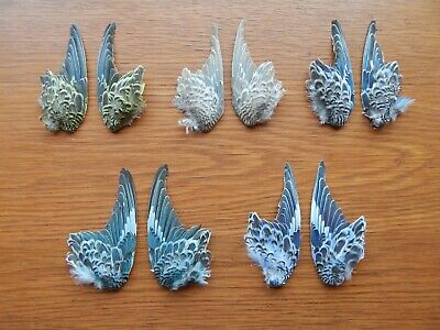 £30 • Buy 5 Pair Dried Domestic Budgie Wings Bird Wings Fly Tying Arts Crafts Taxidermy