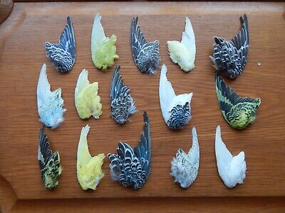 £35 • Buy  15 Odd Dried Domestic  Budgie Wings Bird Wings Fly Tying Arts Crafts Taxidermy