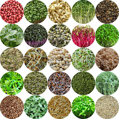 £2.99 • Buy MICROGREENS & SPROUTING Seeds - 21 Different Types - Amaranth, Alfalfa, Pea