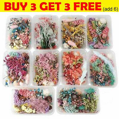 AU8.99 • Buy 1Box Real Dried Flower For Epoxy Resin Pendant Art Craft Jewellery Making DIY C2